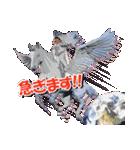 氷川きよしスタンプ(個別スタンプ:13)