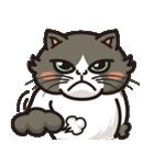 オコねこ~気難しい顔は生まれつき!~(個別スタンプ:02)