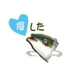 コスパぶり(香川県出身鰤)(個別スタンプ:37)