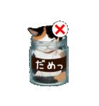 びんねこ(個別スタンプ:40)