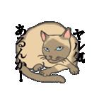 いろいろ毛柄の猫会話(個別スタンプ:11)