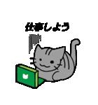 しまネコちゃん 【なにか持ってくる編】