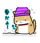 柴犬のしーたん ハロウィン~お正月編(個別スタンプ:11)