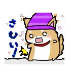柴犬のしーたん ハロウィン~お正月編(個別スタンプ:12)