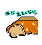 柴犬のしーたん ハロウィン~お正月編(個別スタンプ:13)
