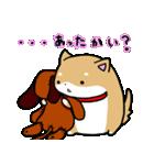 柴犬のしーたん ハロウィン~お正月編(個別スタンプ:19)