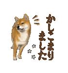 さすが!柴犬(よく使う言葉編)(個別スタンプ:04)