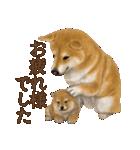 さすが!柴犬(よく使う言葉編)(個別スタンプ:05)