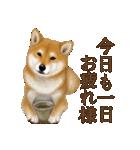 さすが!柴犬(よく使う言葉編)(個別スタンプ:08)