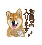 さすが!柴犬(よく使う言葉編)(個別スタンプ:24)