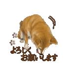 さすが!柴犬(よく使う言葉編)(個別スタンプ:25)