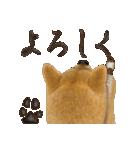 さすが!柴犬(よく使う言葉編)(個別スタンプ:27)
