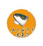 お久しぶり、再会編(香川県出身)鰤9(個別スタンプ:1)