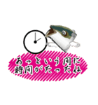 お久しぶり、再会編(香川県出身)鰤9(個別スタンプ:12)