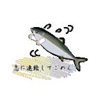 お久しぶり、再会編(香川県出身)鰤9(個別スタンプ:32)