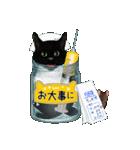 【びんねこ】黒猫バージョン(個別スタンプ:31)