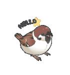 小鳥のスタンプ(個別スタンプ:01)