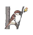 小鳥のスタンプ(個別スタンプ:03)