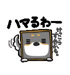 黒柴Gちゃん。(個別スタンプ:35)
