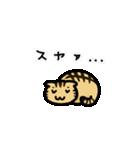きじとらニャンコ(個別スタンプ:04)