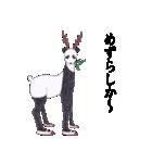 博多のしか(個別スタンプ:7)