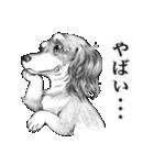 表情豊かな犬たち(個別スタンプ:25)