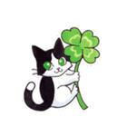 いつものネコたち(個別スタンプ:01)