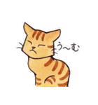 いつものネコたち(個別スタンプ:36)