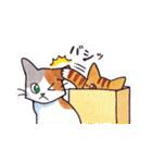 いつものネコたち(個別スタンプ:38)