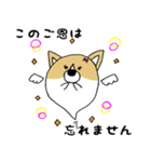 おばけコーギー【敬語】(個別スタンプ:09)