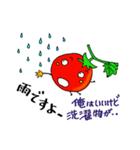 ミニトマトと一緒に天気。一緒に会話。(個別スタンプ:15)