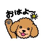 Cute! トイプードルスタンプ(個別スタンプ:01)