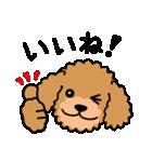 Cute! トイプードルスタンプ(個別スタンプ:04)