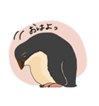 クールでニヒルなあいつはイワトビペンギン(個別スタンプ:13)