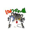 猫時々犬(個別スタンプ:25)