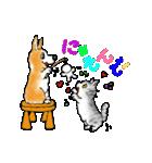 猫時々犬(個別スタンプ:29)