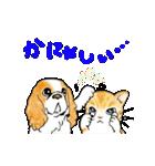 猫時々犬(個別スタンプ:30)
