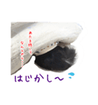 チワワの日常 (ブラックタン&ホワイト)(個別スタンプ:16)
