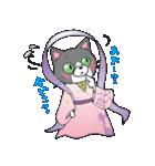 Hiroshima Cat 5 夏(個別スタンプ:11)