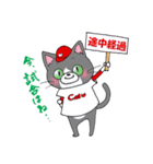 Hiroshima Cat 5 夏(個別スタンプ:25)