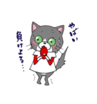 Hiroshima Cat 5 夏(個別スタンプ:40)