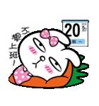 rabbit Q1