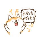 柴ちん2 柴犬とおしゃべり(個別スタンプ:03)