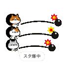アイコンの中から猫だらけ(個別スタンプ:40)