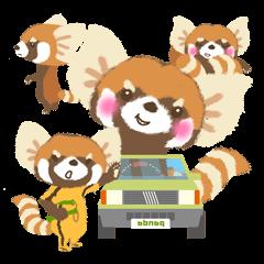 大耳のレッサーパンダ *少熊猫*