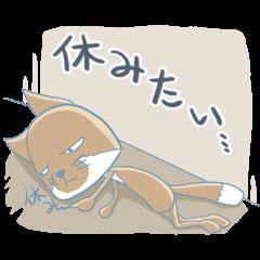 疲れてるチベットスナギツネ