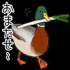 日本の野鳥~冬鳥~