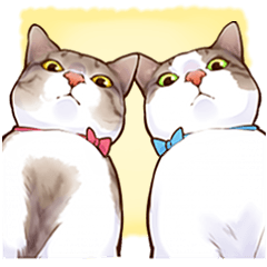 お豆と小豆という猫2