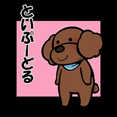 [LINEスタンプ] 一途なトイプー (1)