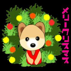 ポメラニアンでPON☆2